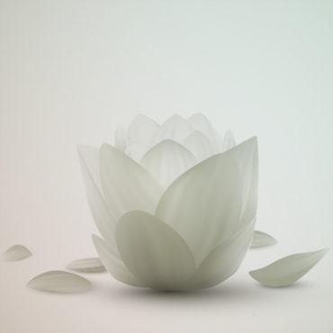 white lotus filter
